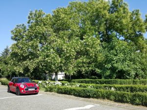 Test MINI Cooper S 5 usi (12)